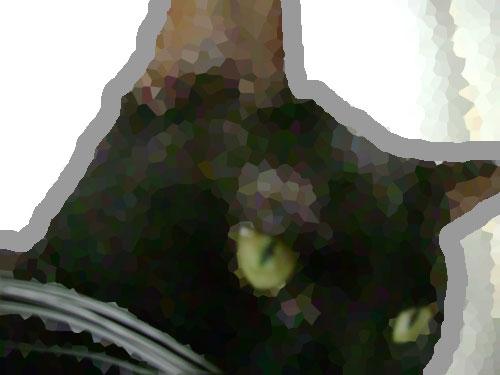 cat_mind